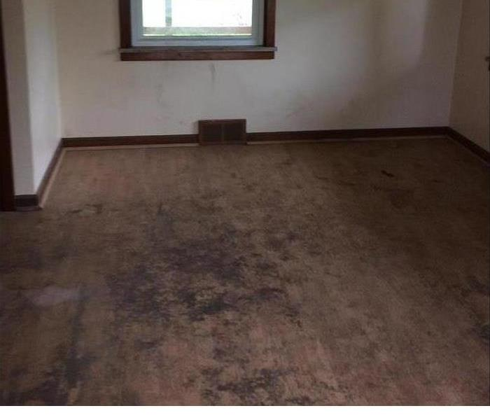 Mold Remediation Turning a Mold Disaster Into an Opportunity