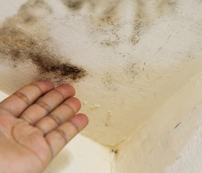 Mold Remediation Mold Growth in the Home: 3 Common Areas Where It May Thrive