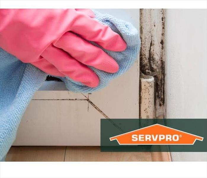 Mold Remediation 3 Reasons Not to Use Bleach When Cleaning Mold