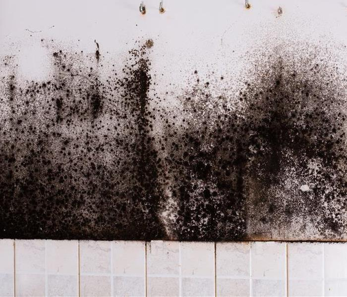 Mold Remediation The ABCs of Mold Prevention