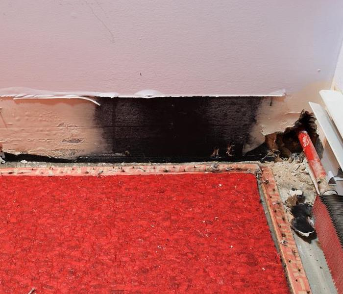Mold Remediation What to do when you find Mold in Your Home in Chagrin Falls, OH
